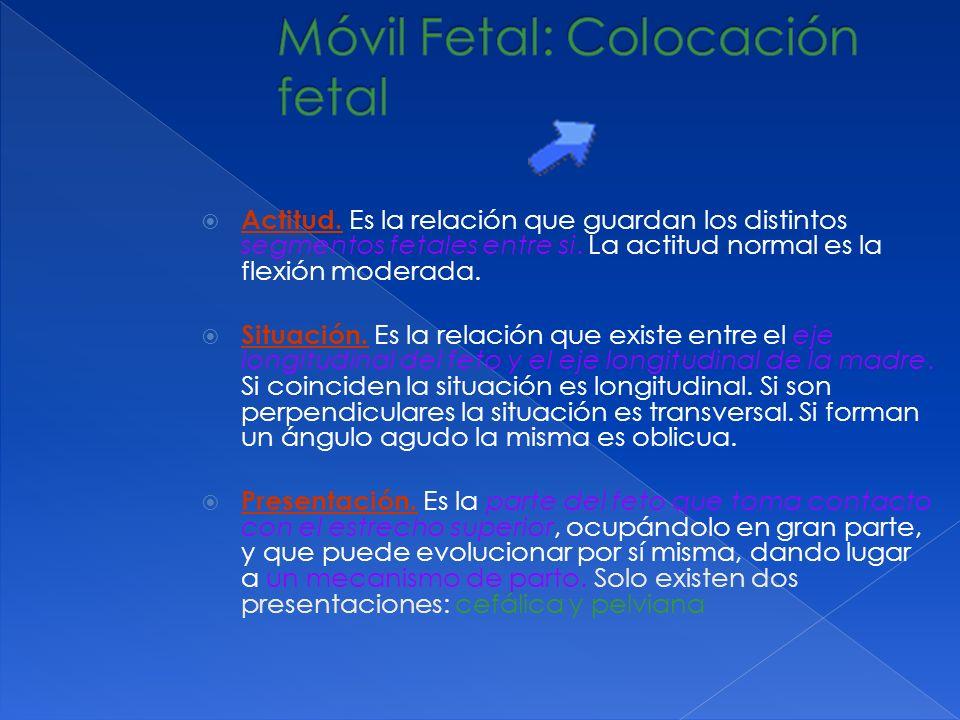 Móvil Fetal: Colocación fetal