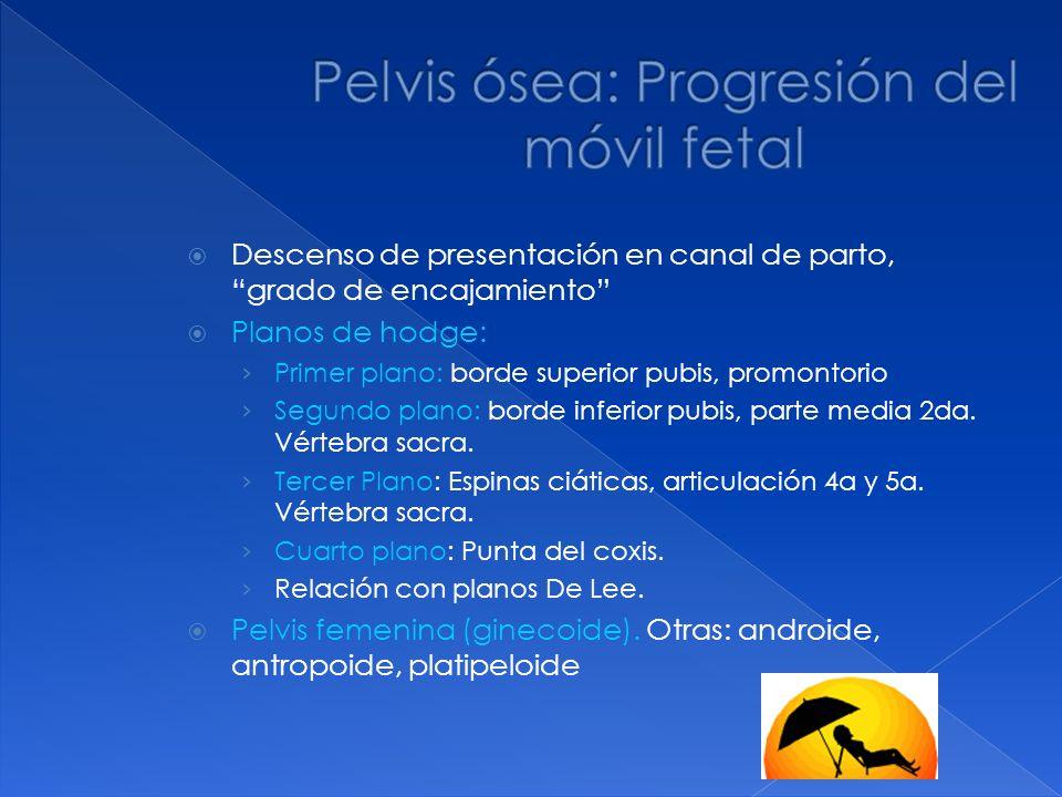 Pelvis ósea: Progresión del móvil fetal