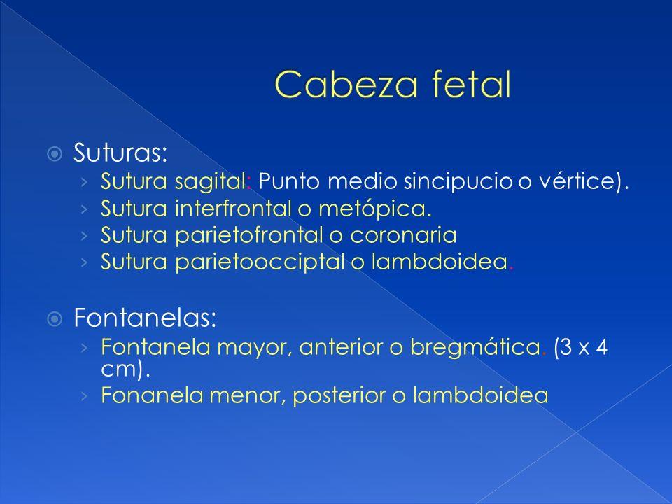 Cabeza fetal Suturas: Fontanelas: