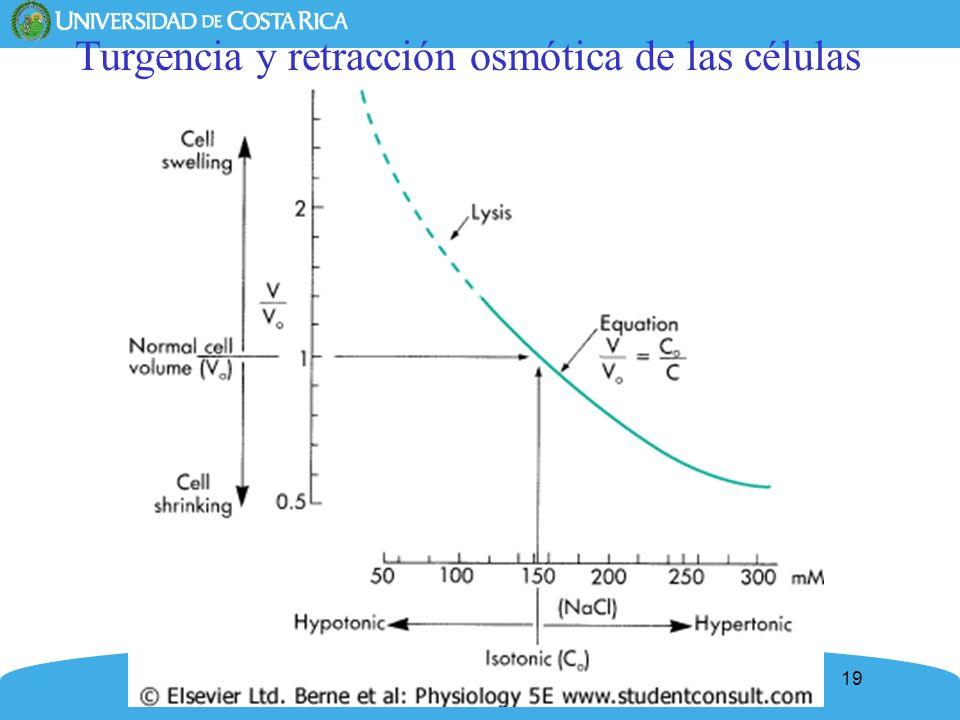 Turgencia y retracción osmótica de las células