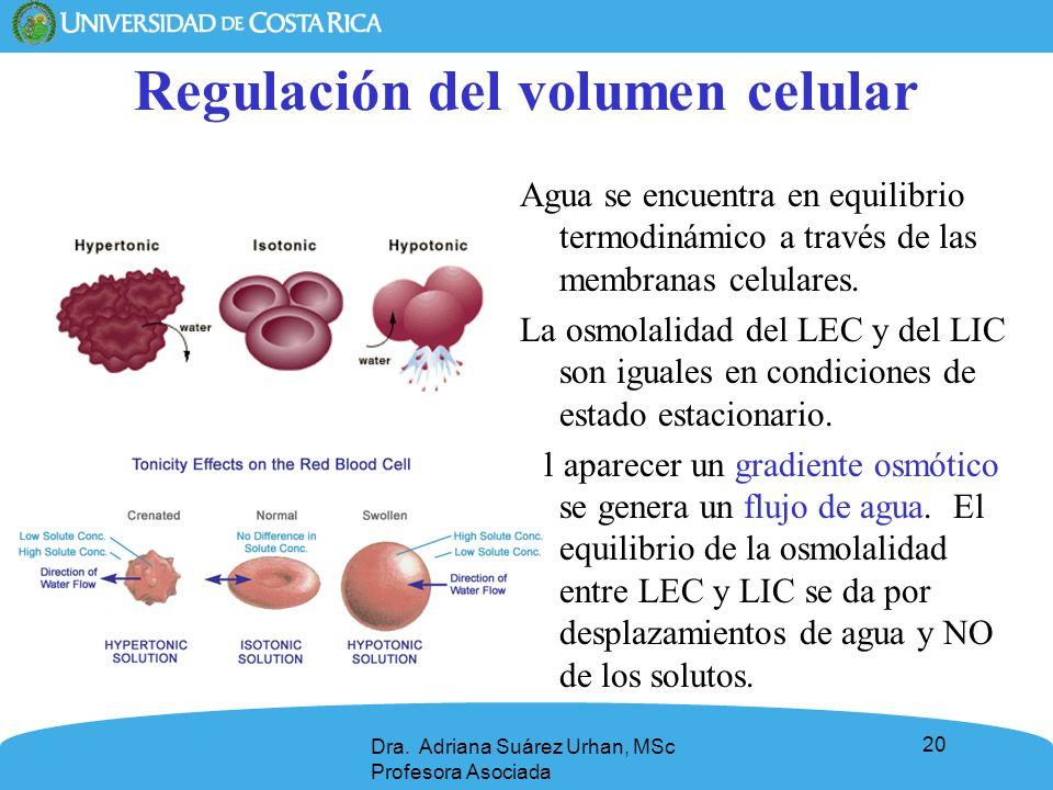 Regulación del volumen celular