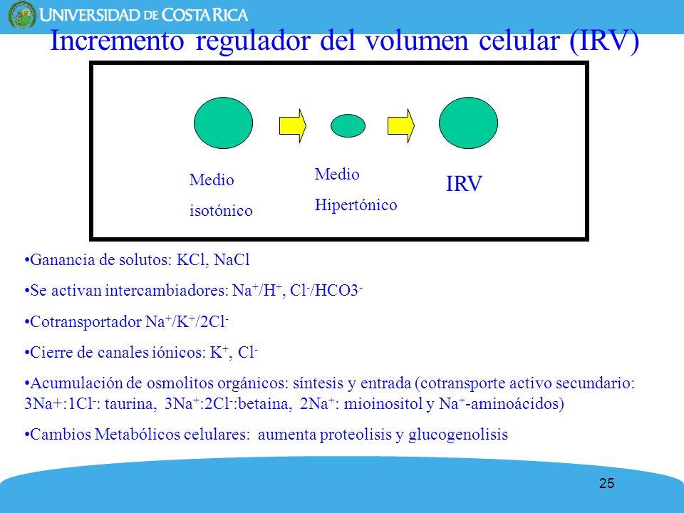 Incremento regulador del volumen celular (IRV)