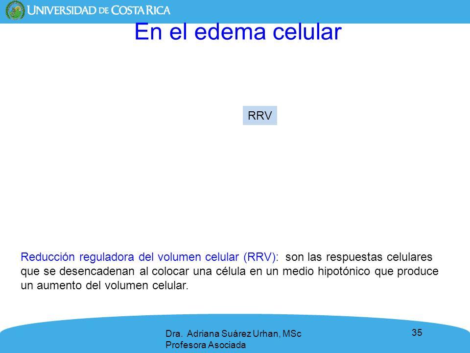 En el edema celular RRV.