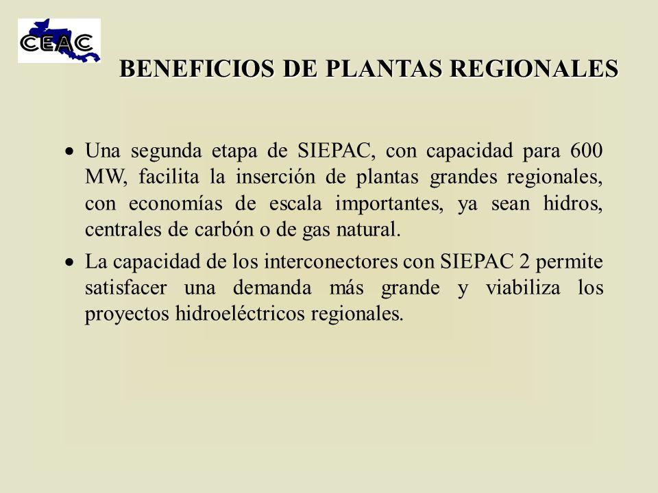 BENEFICIOS DE PLANTAS REGIONALES