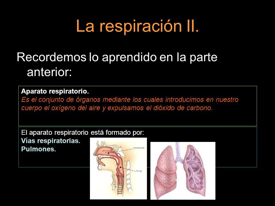 La respiración II. Recordemos lo aprendido en la parte anterior: