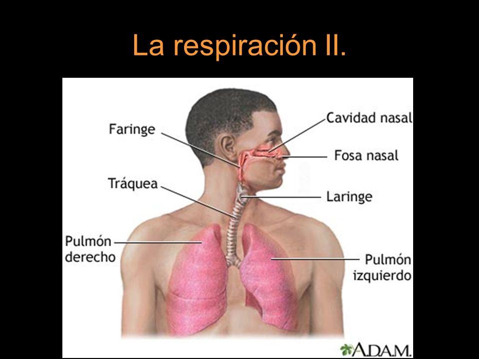 La respiración II.