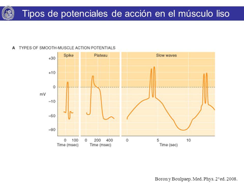 Tipos de potenciales de acción en el músculo liso