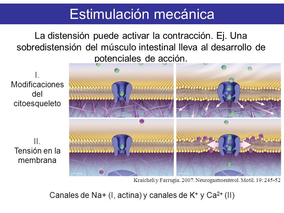 Estimulación mecánica