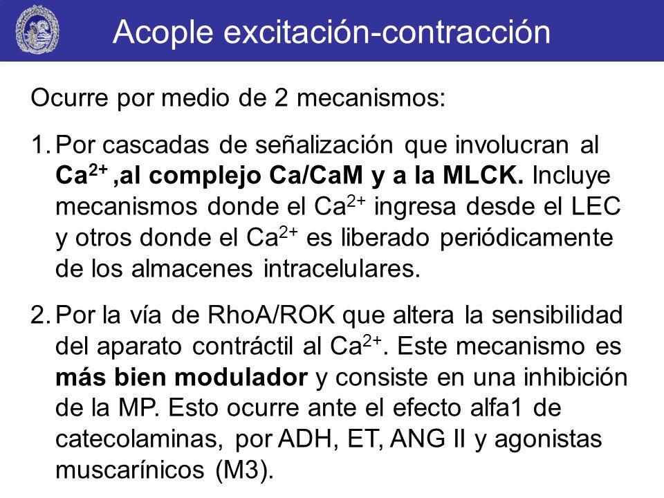 Acople excitación-contracción