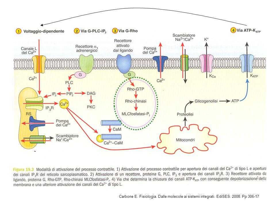 Carbone E. Fisiologia. Dalle molecole ai sistemi integrati. EdiSES