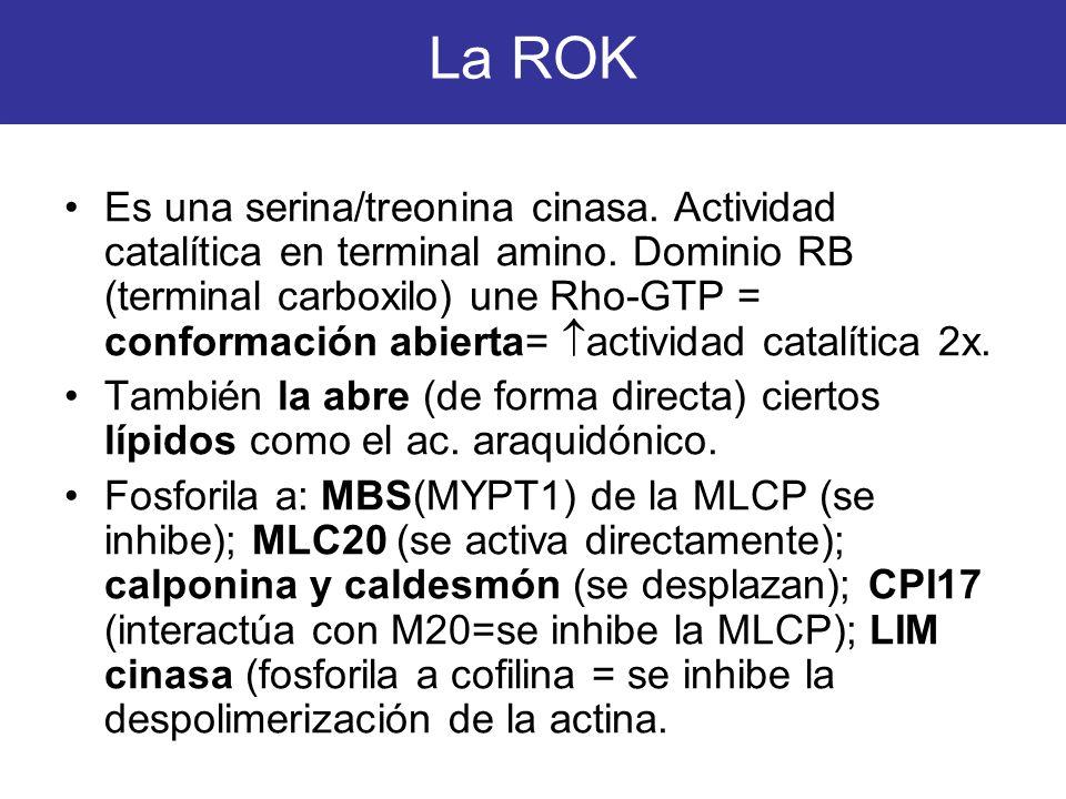 La ROK