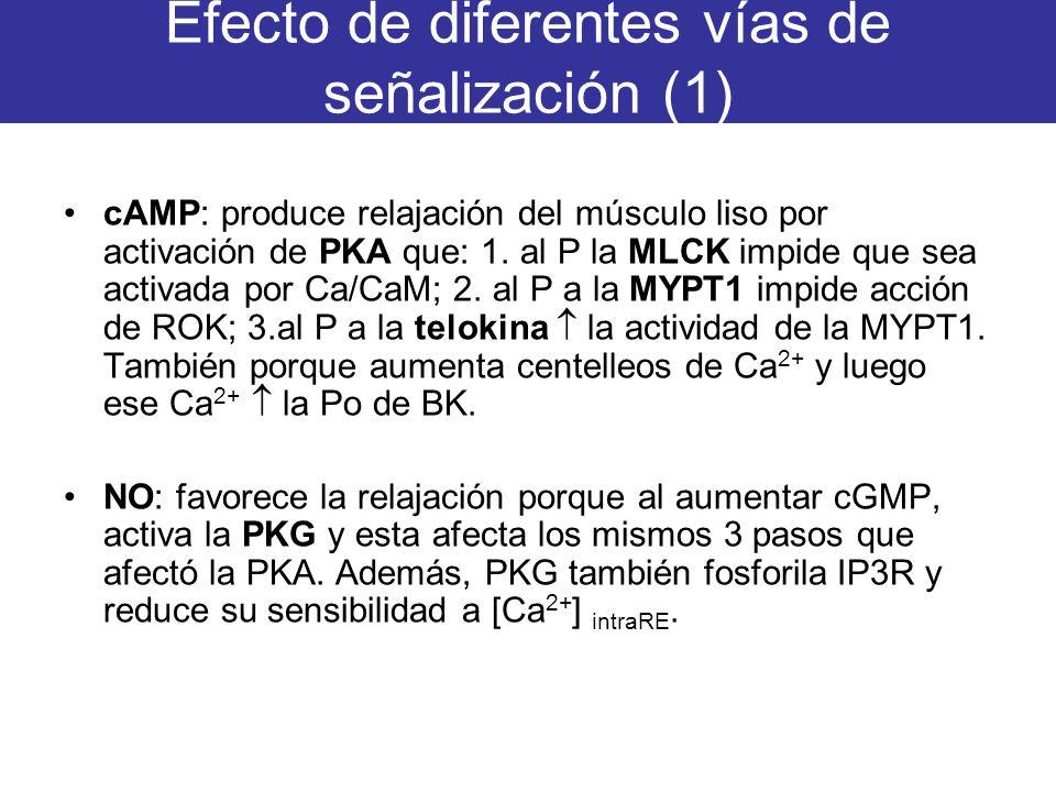 Efecto de diferentes vías de señalización (1)