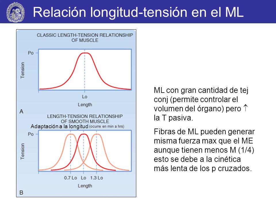 Relación longitud-tensión en el ML