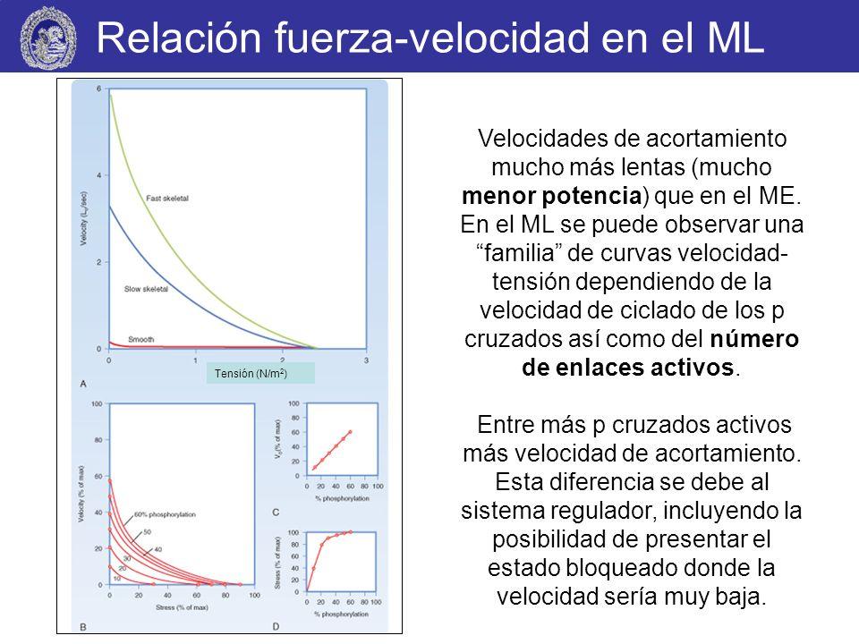 Relación fuerza-velocidad en el ML