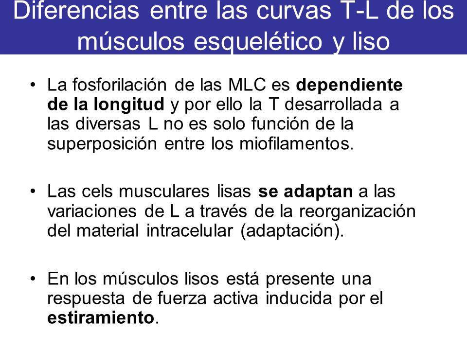 Diferencias entre las curvas T-L de los músculos esquelético y liso