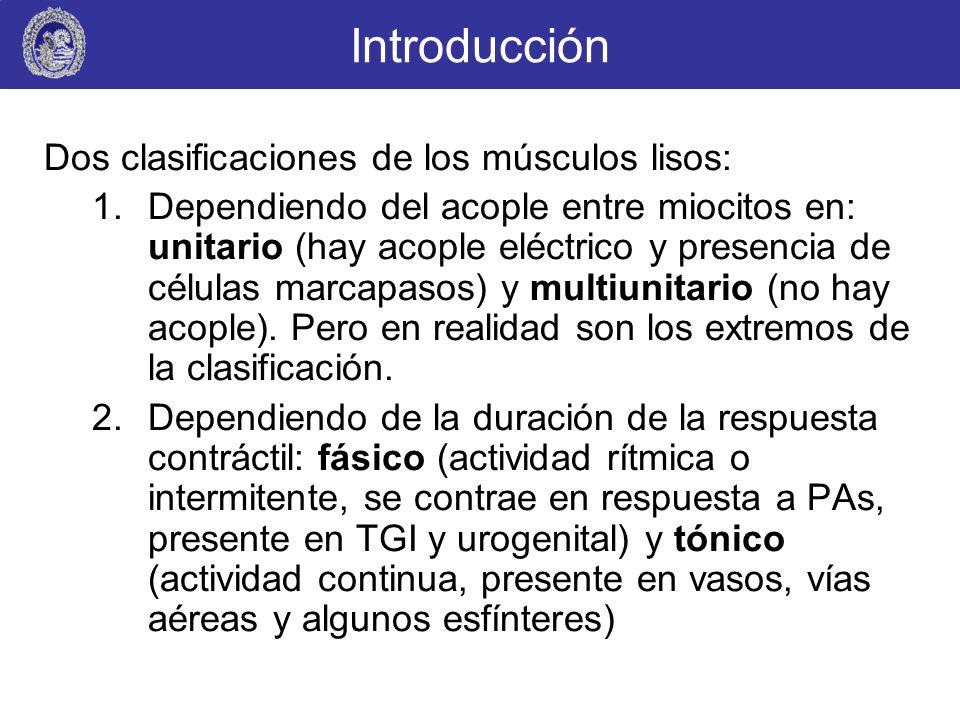 Introducción Dos clasificaciones de los músculos lisos: