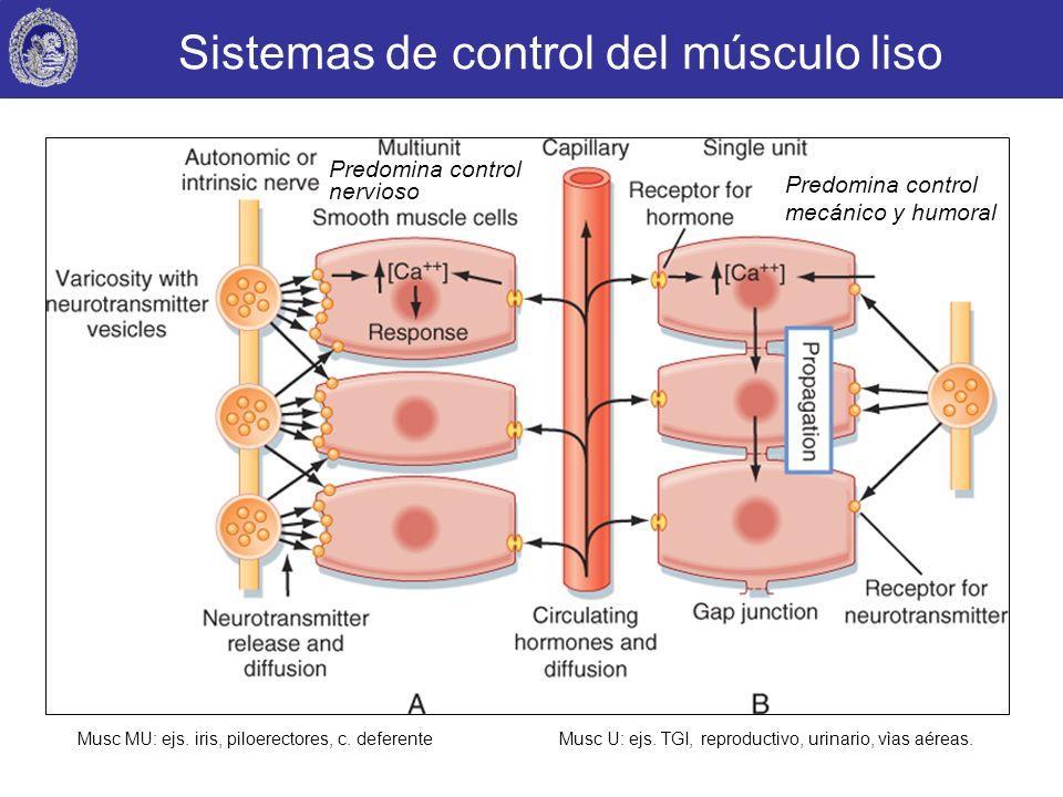 Sistemas de control del músculo liso