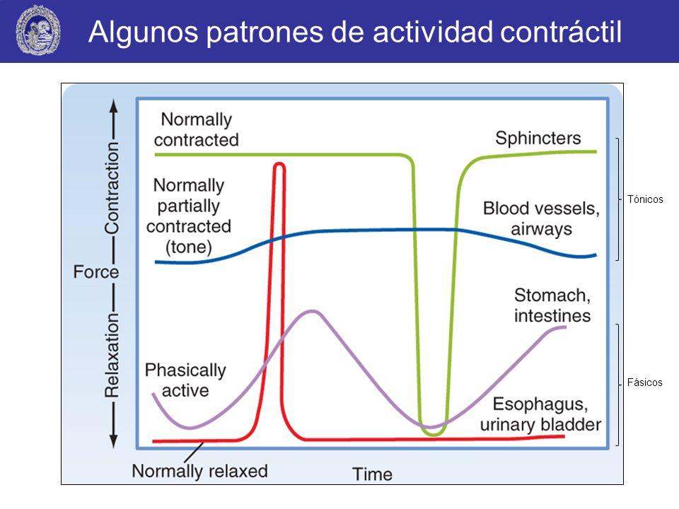 Algunos patrones de actividad contráctil