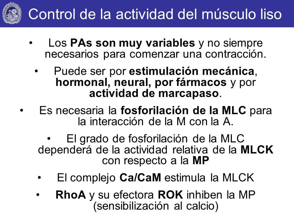 Control de la actividad del músculo liso