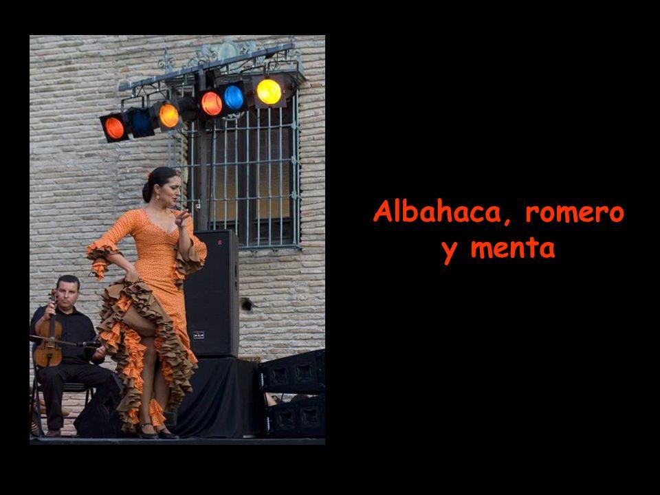 Albahaca, romero y menta