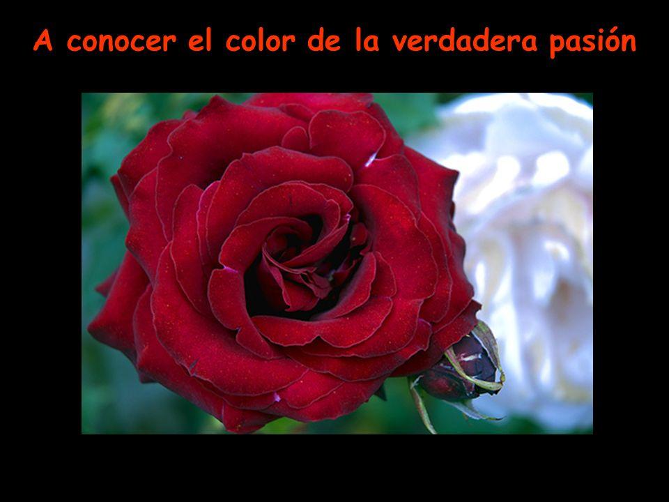 A conocer el color de la verdadera pasión