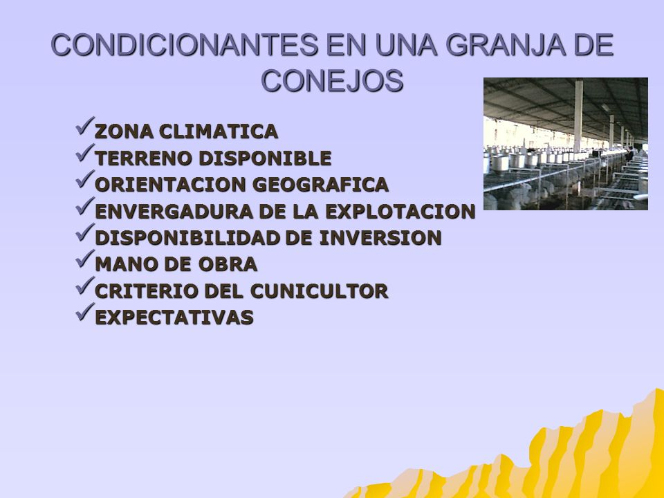 CONDICIONANTES EN UNA GRANJA DE CONEJOS