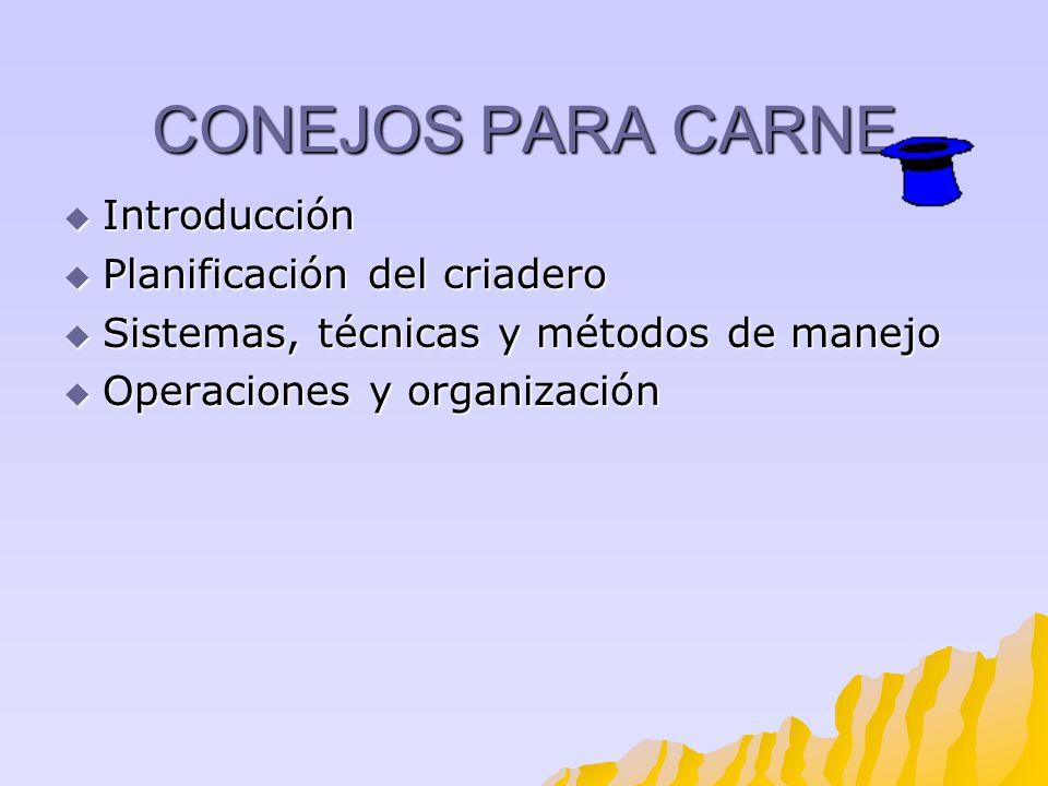CONEJOS PARA CARNE Introducción Planificación del criadero
