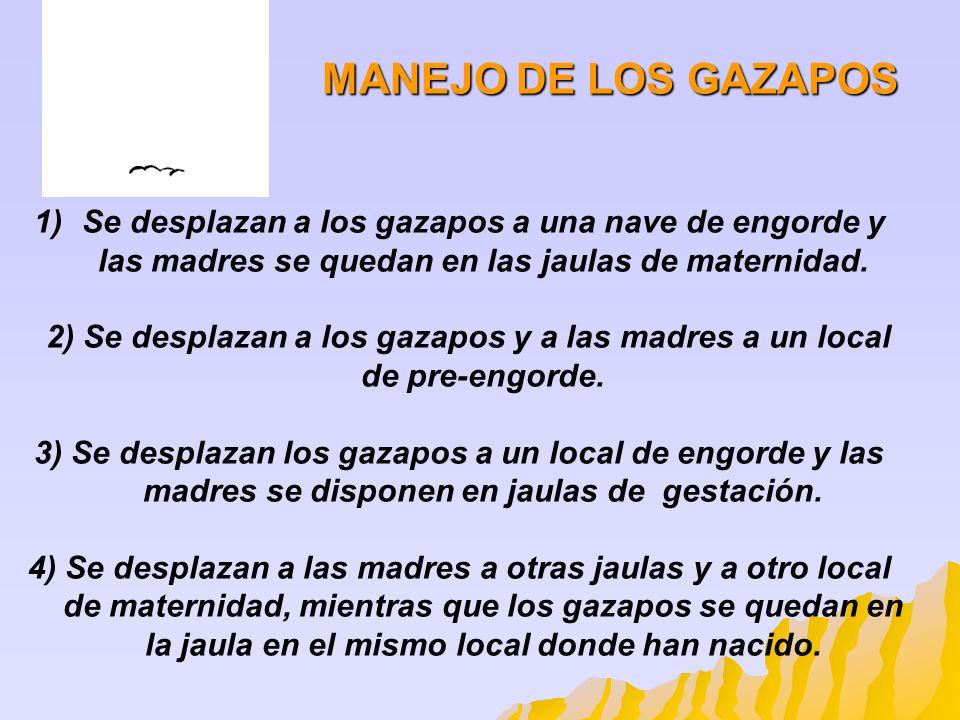 MANEJO DE LOS GAZAPOSSe desplazan a los gazapos a una nave de engorde y las madres se quedan en las jaulas de maternidad.