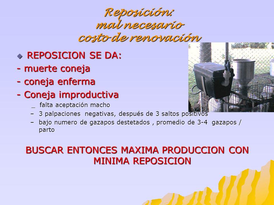 Reposición: mal necesario costo de renovación
