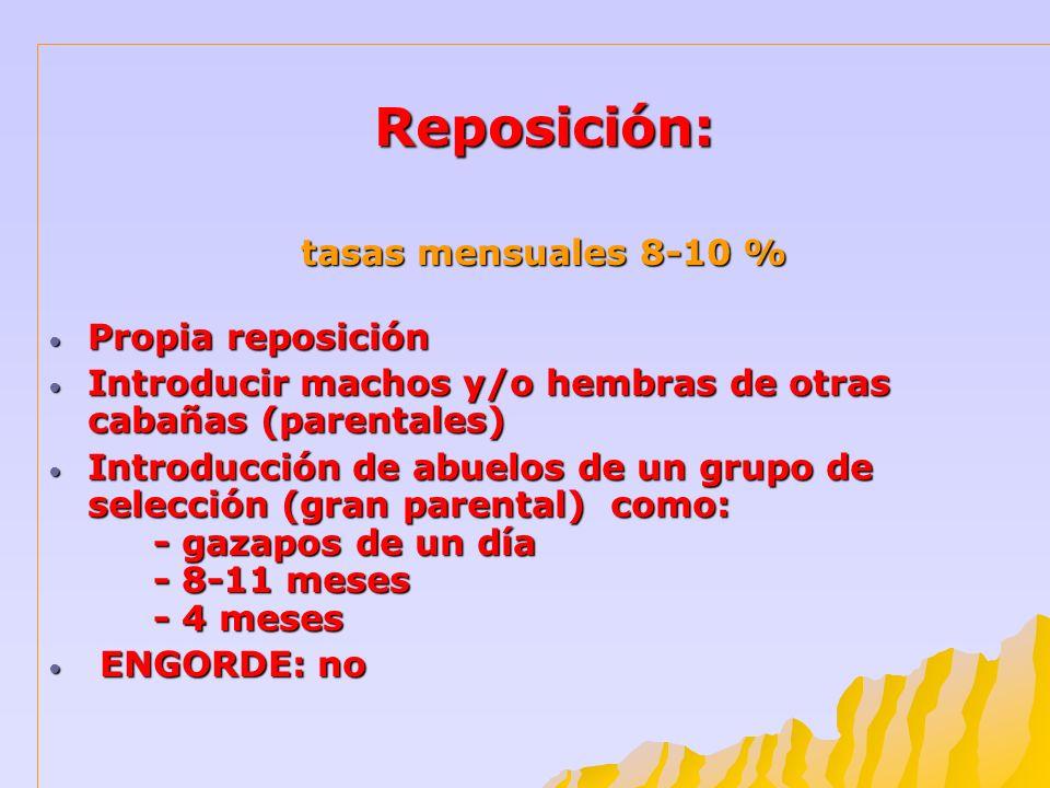 Reposición: tasas mensuales 8-10 % Propia reposición