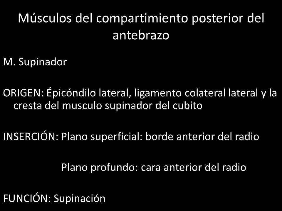 Músculos del compartimiento posterior del antebrazo
