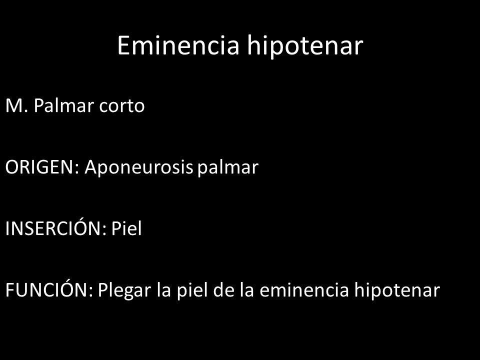 Eminencia hipotenar M.