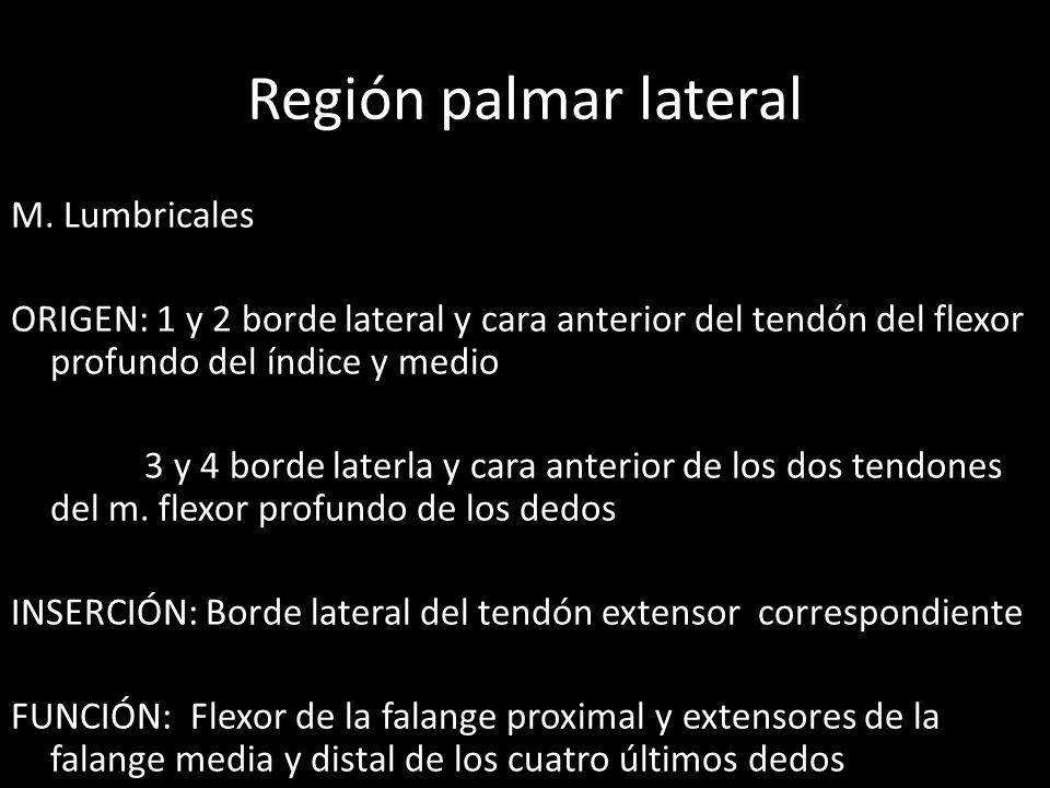 Región palmar lateral