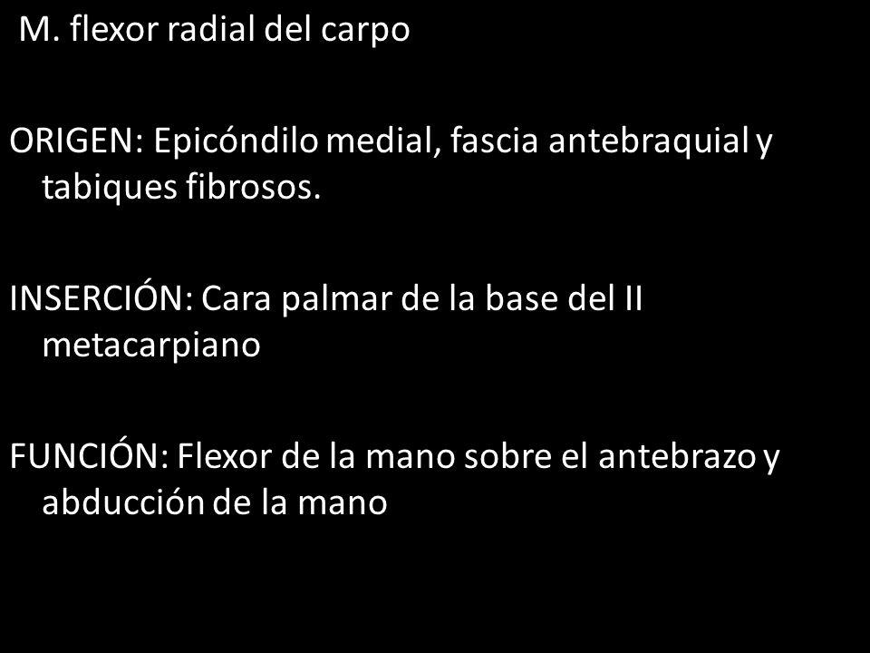 M.flexor radial del carpo ORIGEN: Epicóndilo medial, fascia antebraquial y tabiques fibrosos.