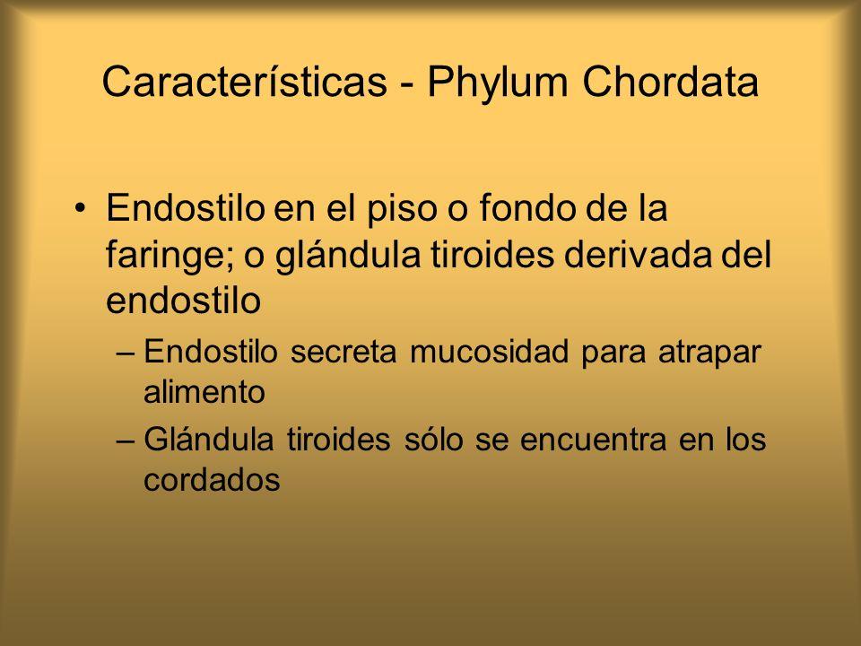 Características - Phylum Chordata