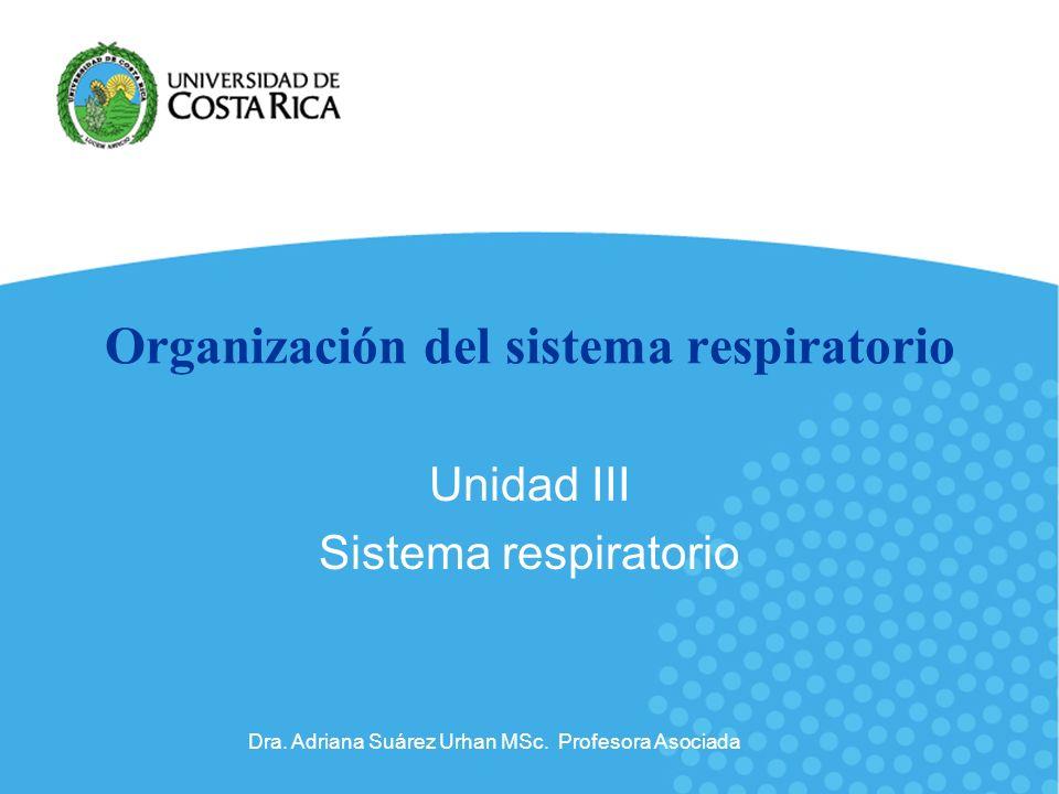 Organización del sistema respiratorio
