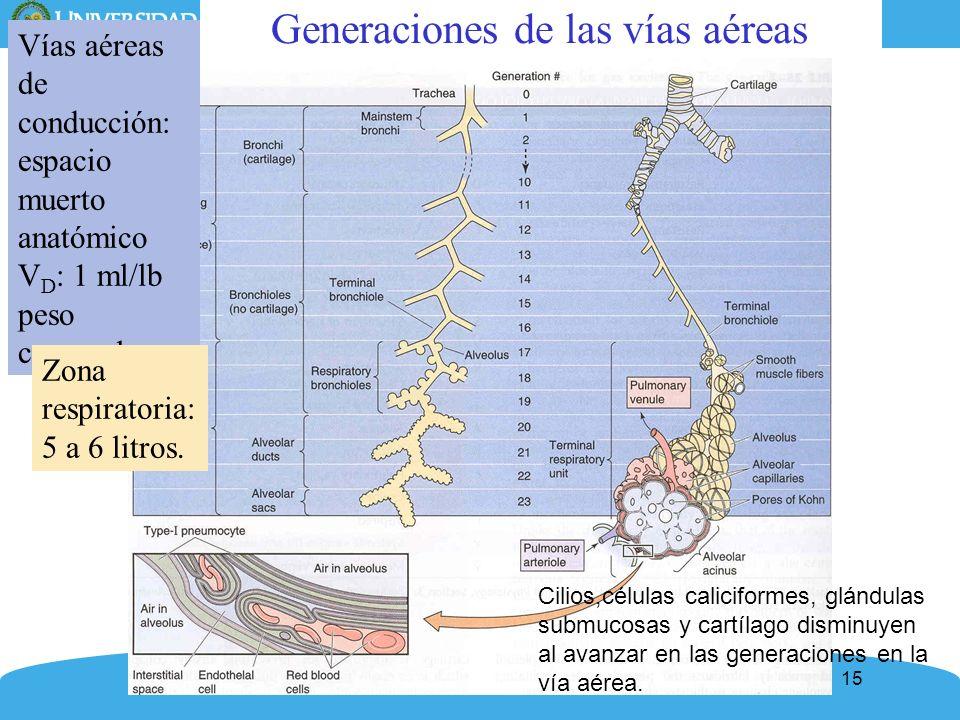 Generaciones de las vías aéreas