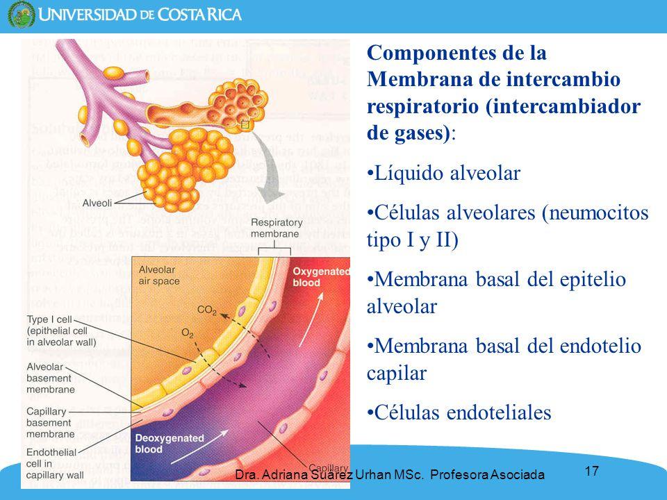 Células alveolares (neumocitos tipo I y II)