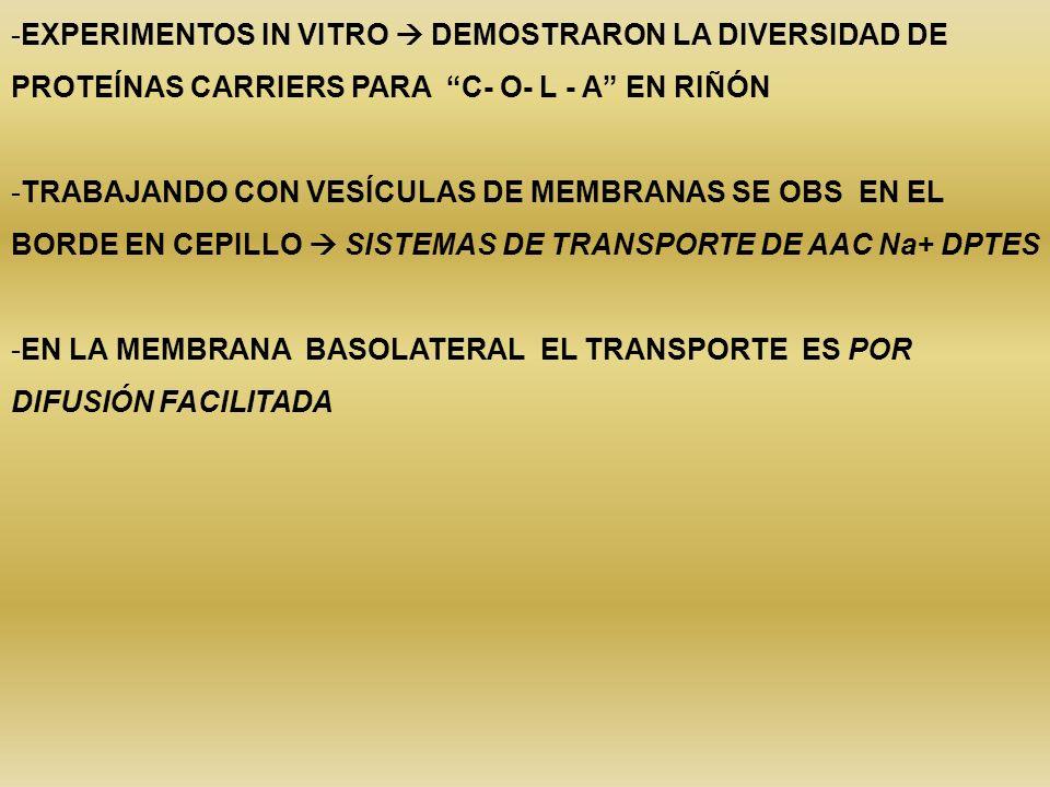 EXPERIMENTOS IN VITRO  DEMOSTRARON LA DIVERSIDAD DE PROTEÍNAS CARRIERS PARA C- O- L - A EN RIÑÓN