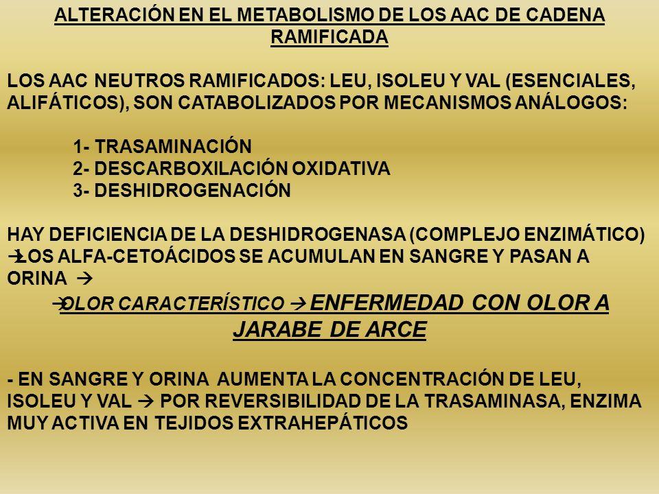 ALTERACIÓN EN EL METABOLISMO DE LOS AAC DE CADENA RAMIFICADA