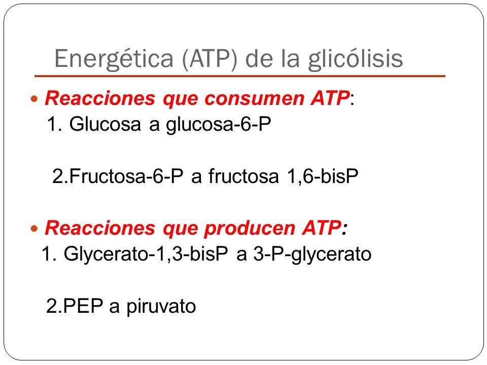 Energética (ATP) de la glicólisis
