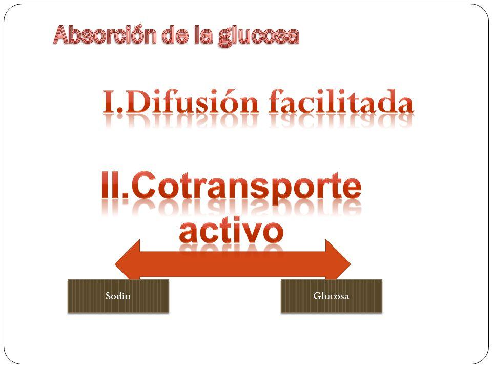 Absorción de la glucosa