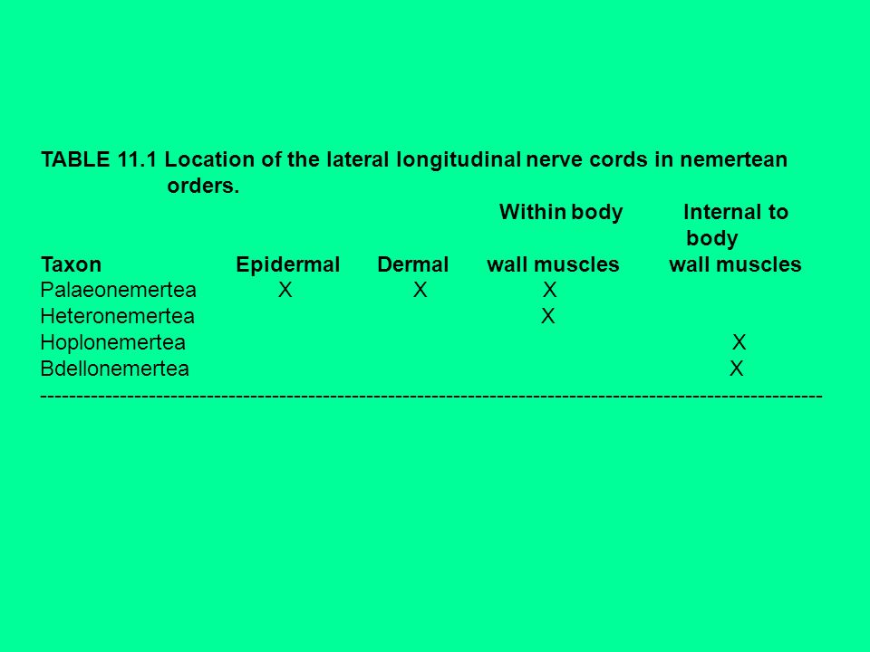 TABLE 11.1 Location of the lateral longitudinal nerve cords in nemertean
