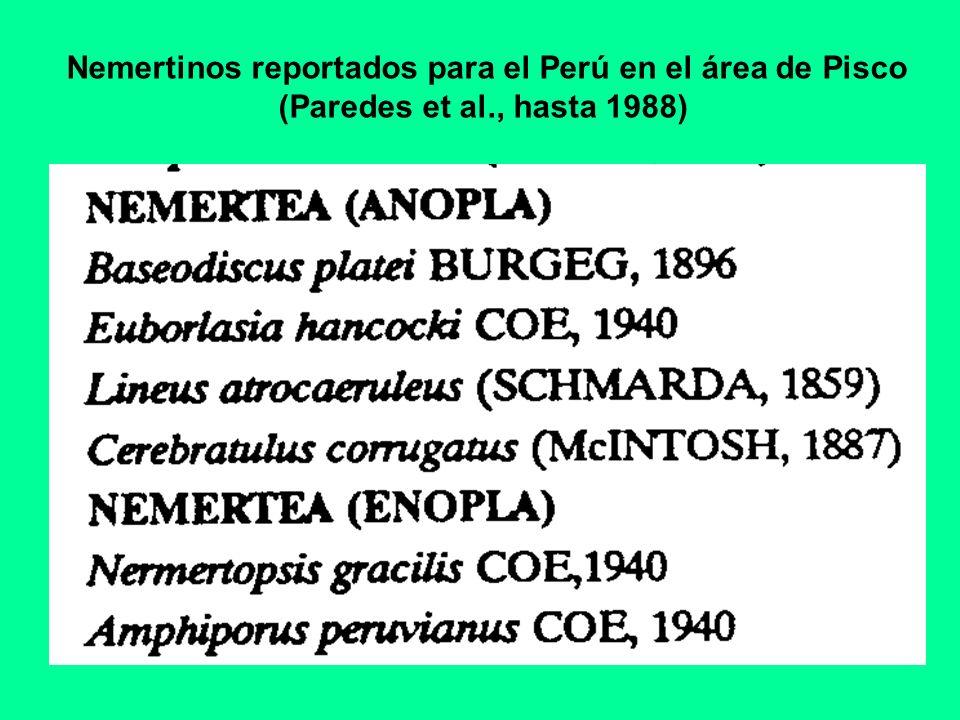 Nemertinos reportados para el Perú en el área de Pisco