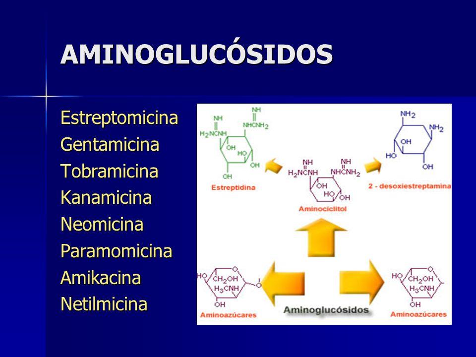 AMINOGLUCÓSIDOS Estreptomicina Gentamicina Tobramicina Kanamicina