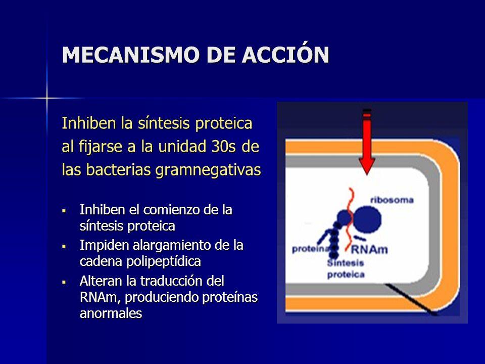 MECANISMO DE ACCIÓN Inhiben la síntesis proteica
