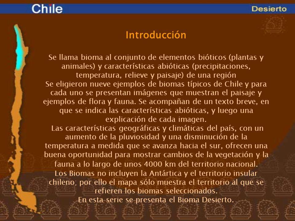 En esta serie se presenta el Bioma Desierto.