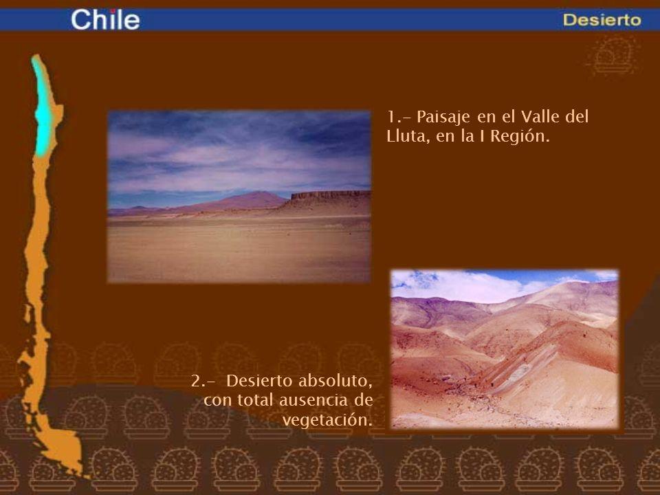 1.- Paisaje en el Valle del Lluta, en la I Región.