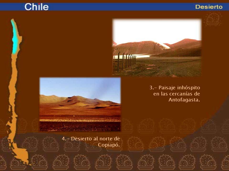 3.- Paisaje inhóspito en las cercanías de Antofagasta.