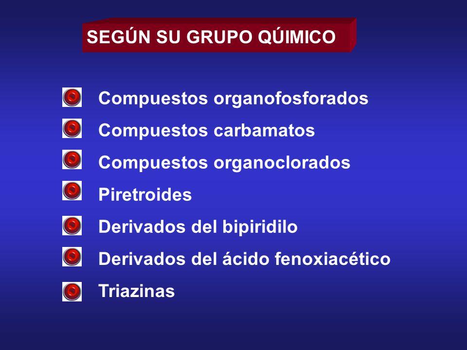 SEGÚN SU GRUPO QÚIMICO Compuestos organofosforados. Compuestos carbamatos. Compuestos organoclorados.